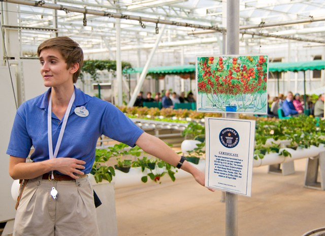 A Disney Intern gives a Behind the Seeds tour at Epcot; she's wearing a blue polo shirt and khaki shorts, gesturing at a