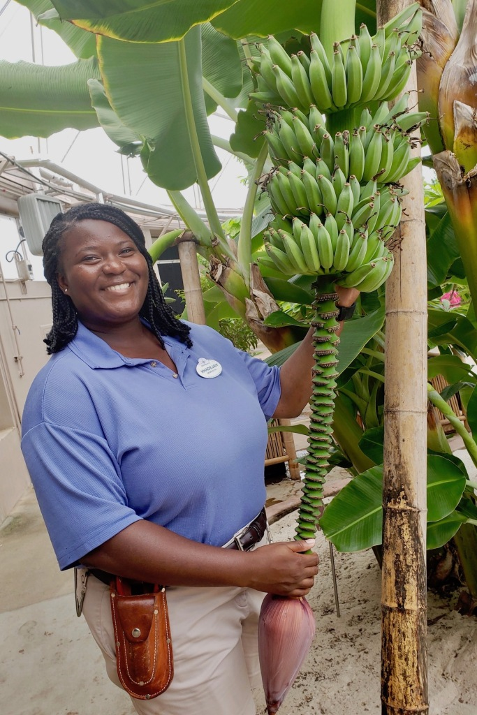 Khadejah Scott holds a banana plant inside Living with the Land; she is dressed in her cast member attire of a blue polo shirt and khaki shorts